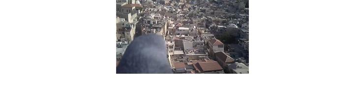אמיר יציב - Superstition in the Pigeon